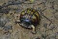 Battery Rock turtle.jpg