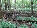 Battle Creek Cypress Swamp 47.jpg