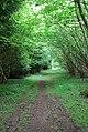 Baverstock Long Coppice - geograph.org.uk - 474519.jpg