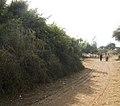 Bazaar road, Syed Matto Shah - panoramio.jpg