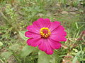 Beautiful flower06.JPG