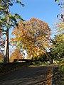 Beech tree at entrance to North Cheriton manor - geograph.org.uk - 1099390.jpg