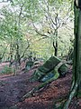 Beeches and Boulders - geograph.org.uk - 1021008.jpg
