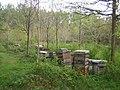 Beehives, Romer Wood near Greatmoor - geograph.org.uk - 419201.jpg