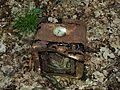 Beelitz Heilstätten -jha- 180491283518.jpeg