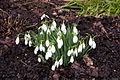 Benington Lordship Garden-4373123274.jpg