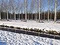 Besneeuwde bomen mallebos.jpg
