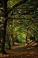 Beverley Westwood IMG 7815 - panoramio.jpg