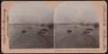 Bird's-eye View of New York Harbor, New York, N.Y, from Robert N. Dennis collection of stereoscopic views.png
