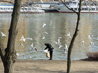 Bird feeding - Seabird feeding