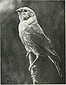 Bird notes (1902) (14563216500).jpg