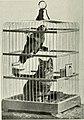 Bird notes (1903) (14746903341).jpg