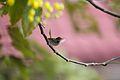 Birds 011 (6935458791).jpg