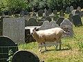 Blackawton churchyard - geograph.org.uk - 208654.jpg