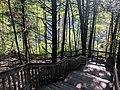 Blackwater Falls State Park WV 33.jpg