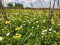 Blooming Prairie (33909839193).jpg