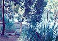 Blue Lake 2.jpg