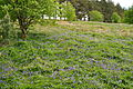Bluebells by Venford Reservoir (4284).jpg