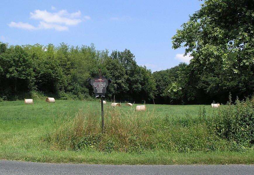 Bois de Saint-Guignefort, Sandrans, Dépt. Ain, France
