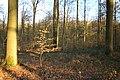 Bois de la Louvière - Livierenbos, Flobecq - Vloesberg 24.jpg