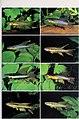 Bonner zoologische Monographien (2000) (19773080633).jpg