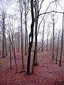 Braine-le-Comte, Belgium - panoramio (6).jpg