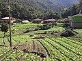 Brasil rural - panoramio (21).jpg