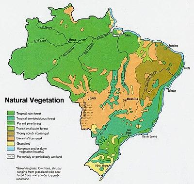 Vegeta��o brasileira.