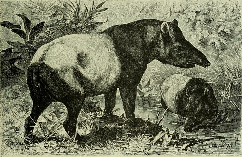 File:Brehm's Life of animals - a complete natural history for popular home instruction and for the use of schools. Mammalia (1896) (20387455366).jpg
