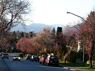Brentwood Park - Spring on Brentlawn Drive, Brentwood, with The Lions in the distance