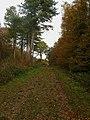 Bridleway, Warningore Wood - geograph.org.uk - 1563058.jpg