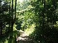 Bridleway in Ashford Hanger - geograph.org.uk - 955847.jpg