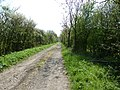 Bridleway south to Lion's Copse - geograph.org.uk - 2366470.jpg