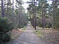 Bridleway through the woodland of Hawley Common, Hampshire - geograph.org.uk - 112788.jpg