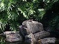 Brisbane City Botanic Gardens (07).jpg