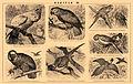 Brockhaus and Efron Encyclopedic Dictionary b48 570-3.jpg