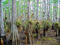 Bromeliads , NPSphoto, P.Baxter (9099847885).jpg