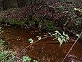 Brown water - panoramio.jpg