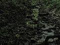 Bubovice-Srbsko - panoramio (127).jpg