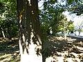 Bucuresti, Romania, Parcul Herastrau (Imagine din parc, 7); B-II-a-A-18802.JPG
