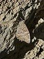 Butterfly 1400058 Nevit.jpg