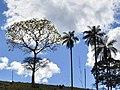 Céu azul - panoramio (3).jpg