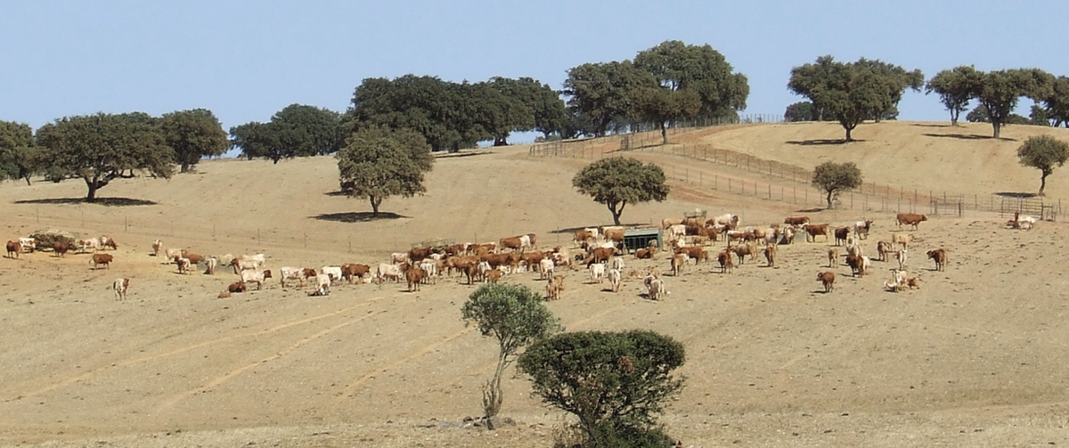 Levage bovin au portugal wikip dia - La maison monte na comporta au portugal ...