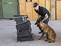 CBP Canine Training Facility El Paso Texas (28127484800).jpg