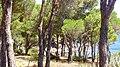 COLERA - panoramio (8).jpg