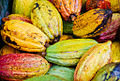 Cacao. Costa Rica.jpg