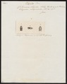 Calamaria oligodon - kop - 1837 - Print - Iconographia Zoologica - Special Collections University of Amsterdam - UBA01 IZ12000251.tif
