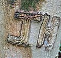 Callus growth on ash tree graffiti.jpg