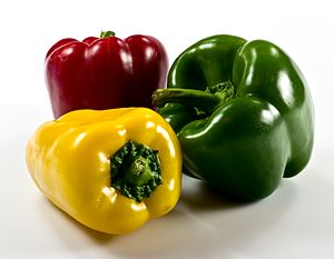 Various colors of the capsicum fruit (sweet pe...