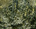 Carbon Leader Gold Ore, Witwatersrand South Africa 4.jpg